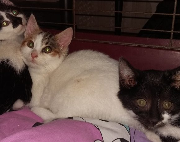 Trzy kociaki