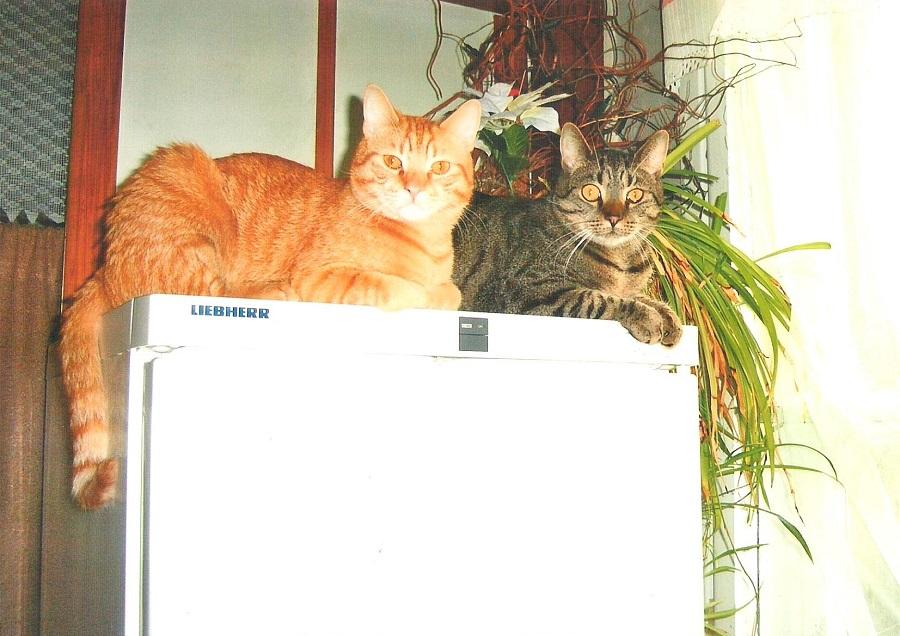 Cztery starsze koty szukają domu stałego lub choćby tymczasowego – parami lub pojedynczo. PILNE!
