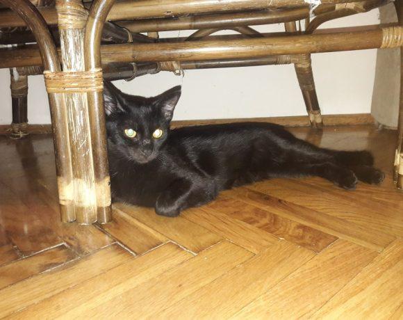 Rene – kotek po przejściach