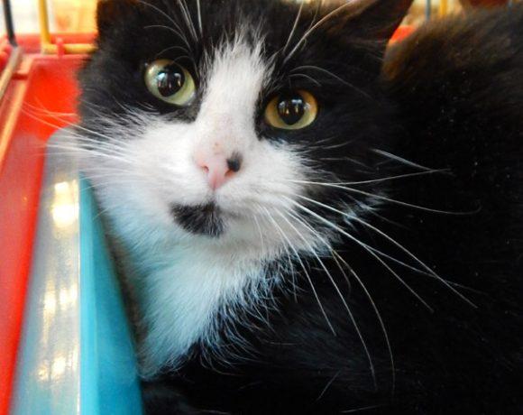 Felicja– grzeczna i miła koteczka.