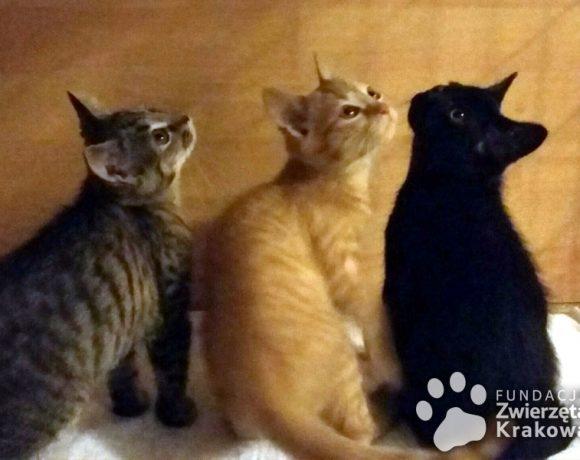Kociaki przedszkolaki