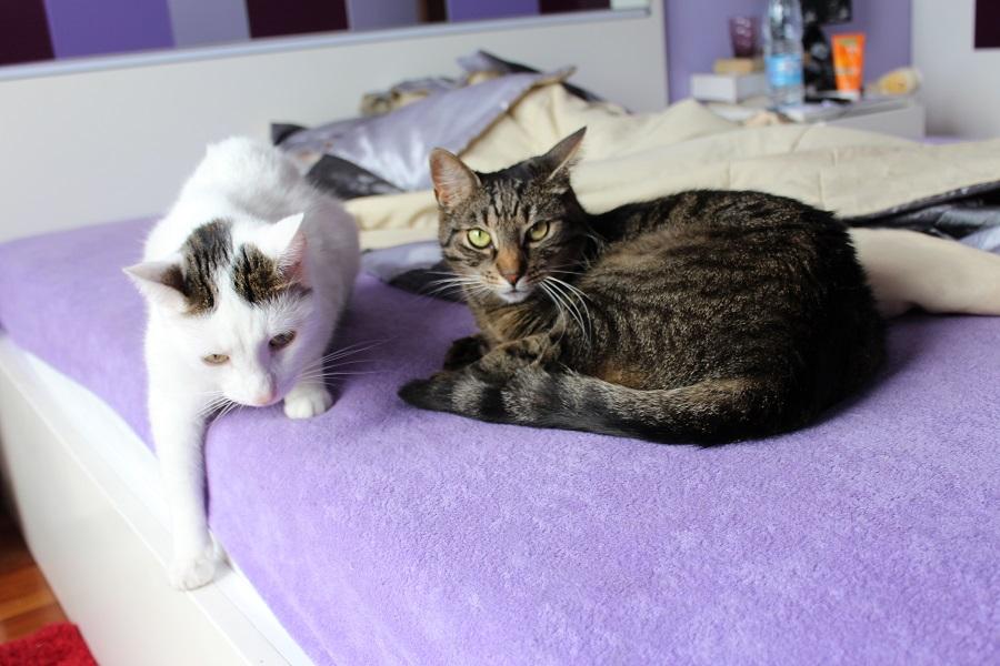 Bibi i Bobik tracą dom i pilnie szukają nowego!