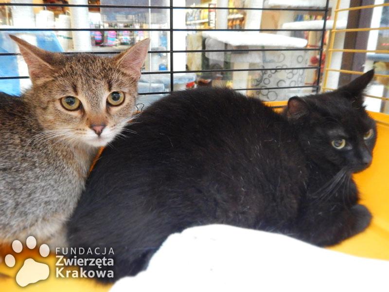 Misia i Czaruś – kocie rodzeństwo