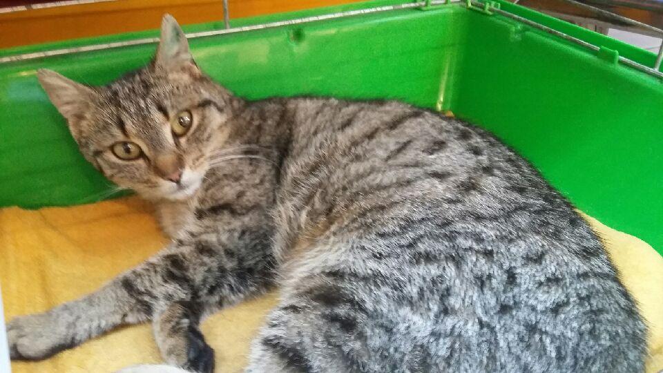 Bezstresowa koteczka Żaneta