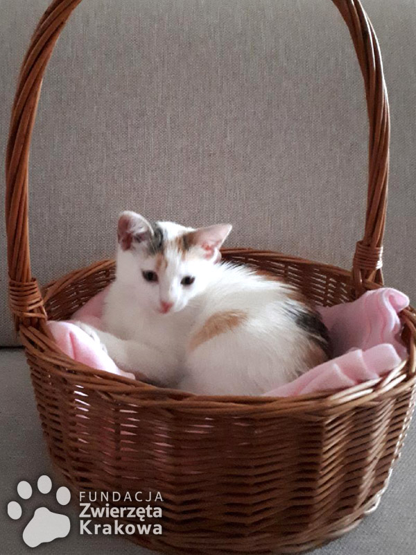 Kolorowa kotka-ślicznotka