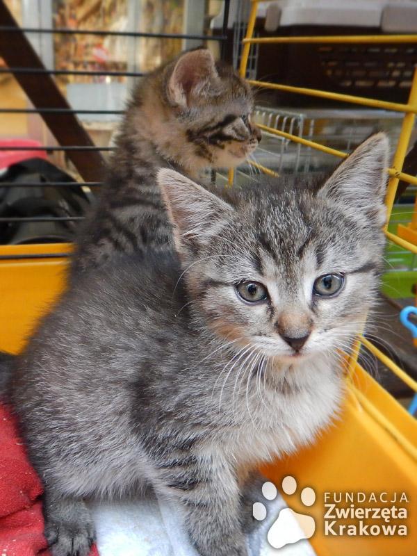 Koteczki jak cukiereczki