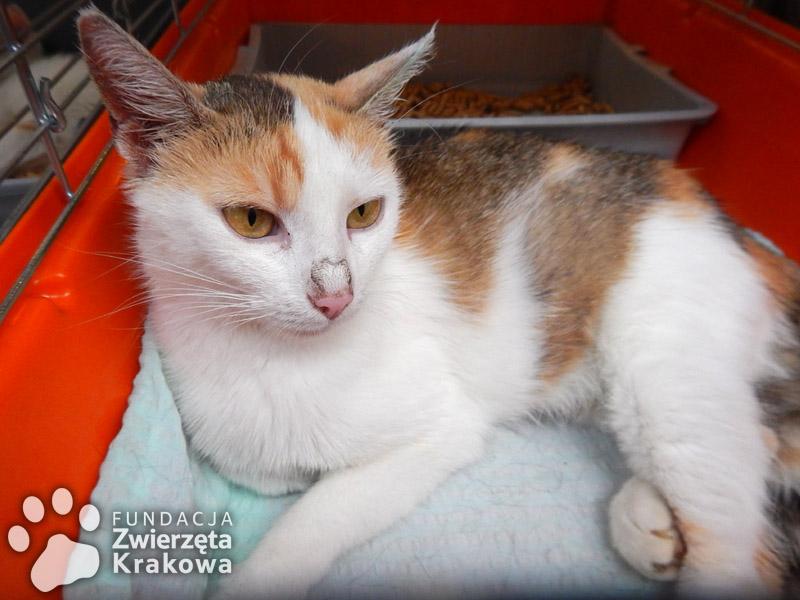 Lila – śliczna kolorowa koteczka