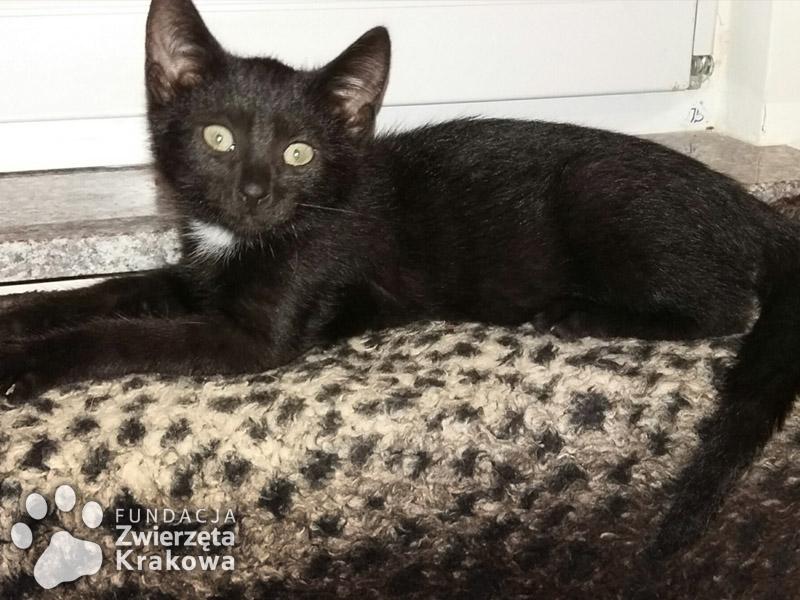 Albercik – czarny maluszek