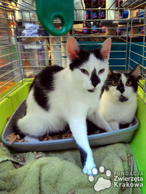 Felek i Kleksik przemiłe kociaki