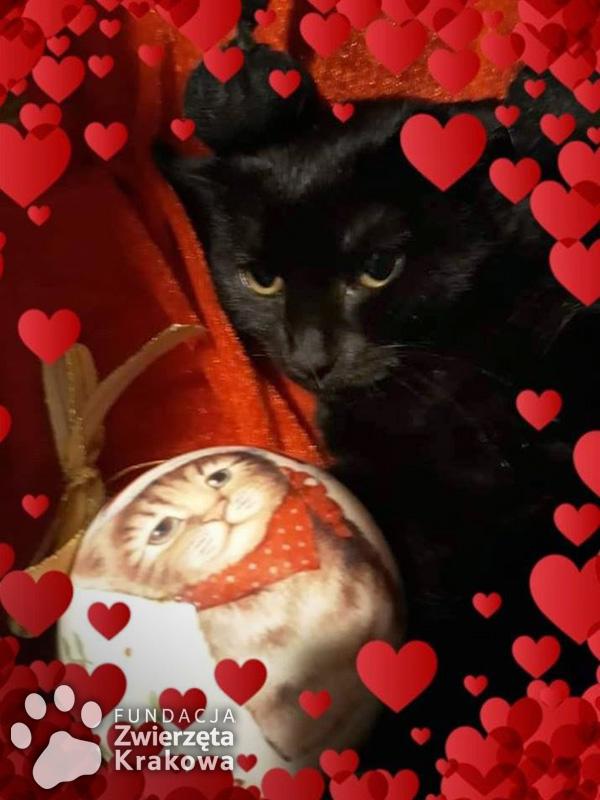 Lola – czarna mała koteczka