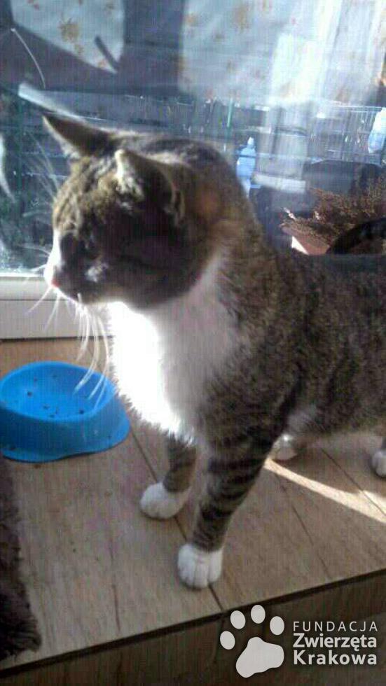 Tina kotka ślicznotka