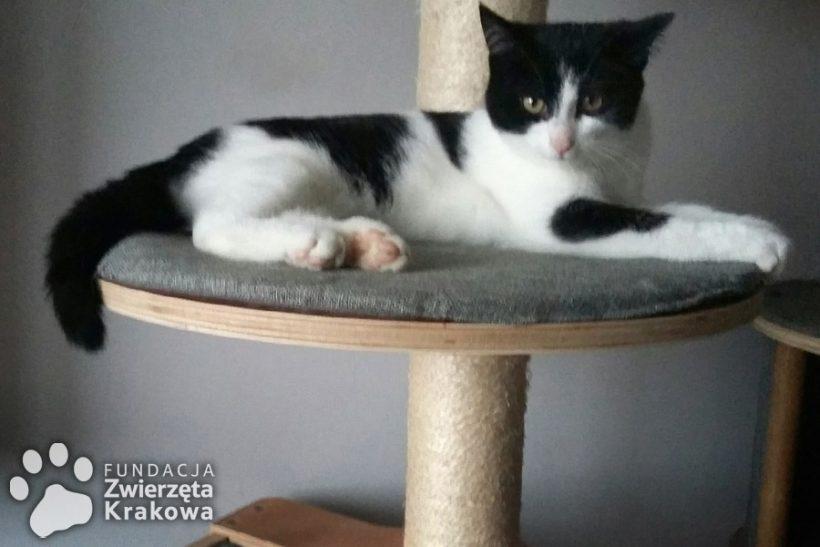 Filemon – kotek do przytulania