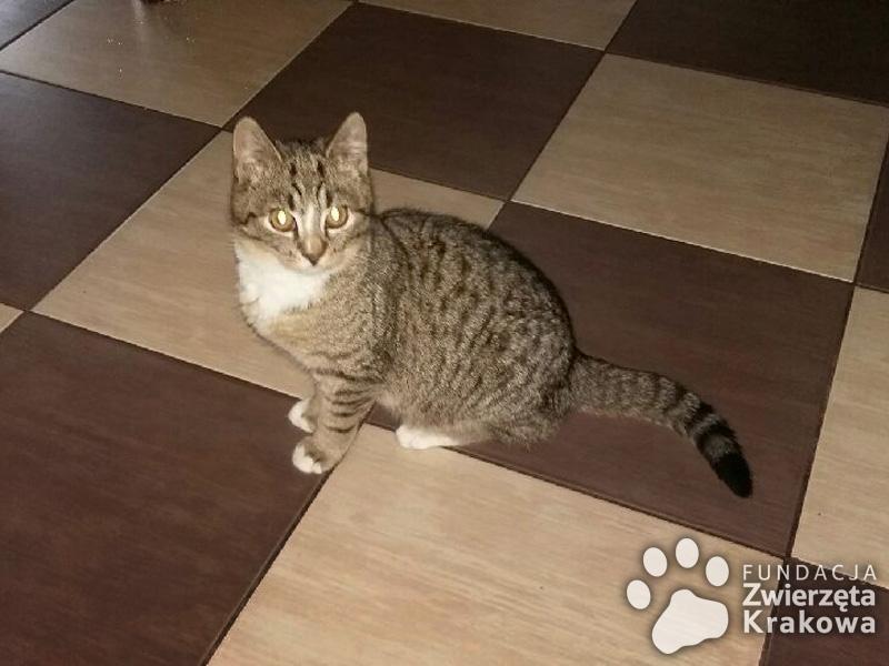 Jędruś – kotek z serduszkiem