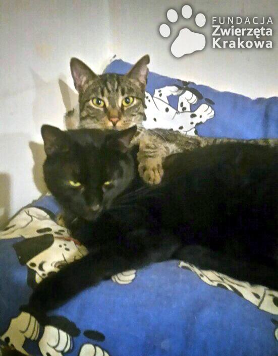 Smerfi i Tobiaszek czekają na wspólny dom
