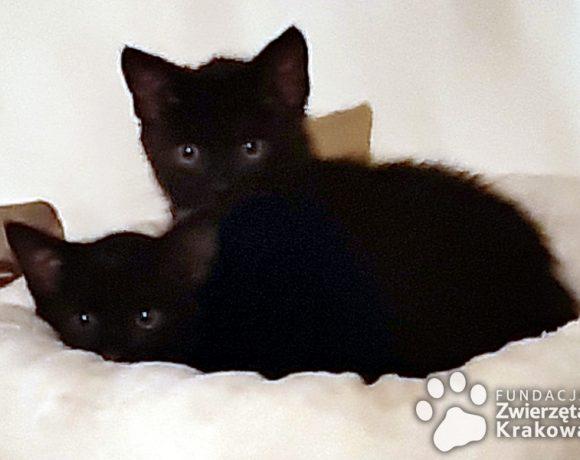 Czarne słodziaki