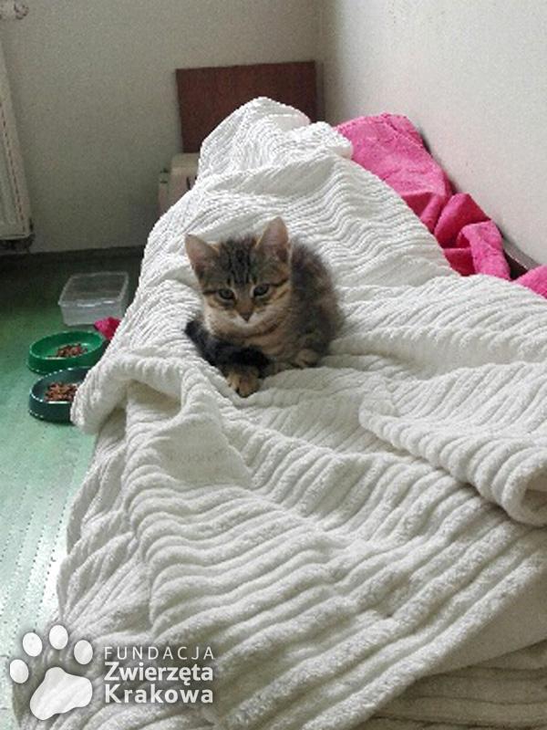 Bardzo słodka mała kotka