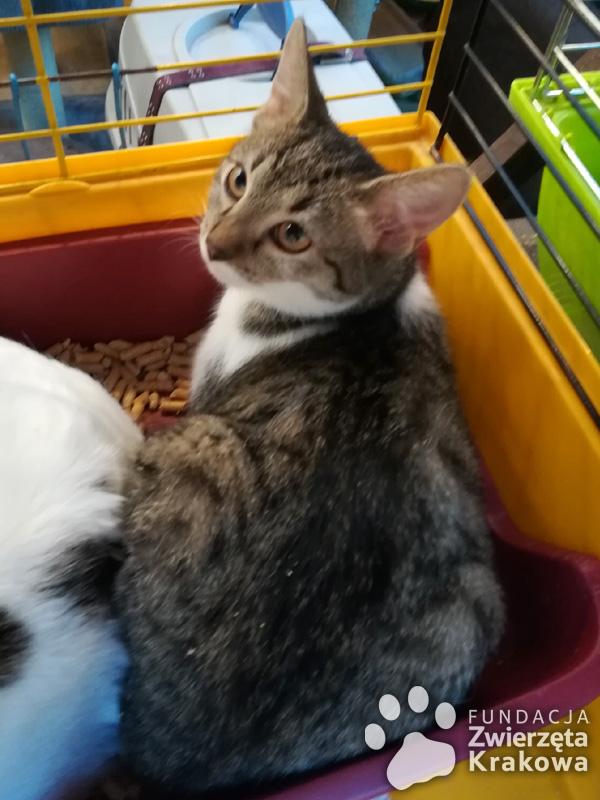 Urocze koteczki Pixi i Dixi szukają dobrego domu