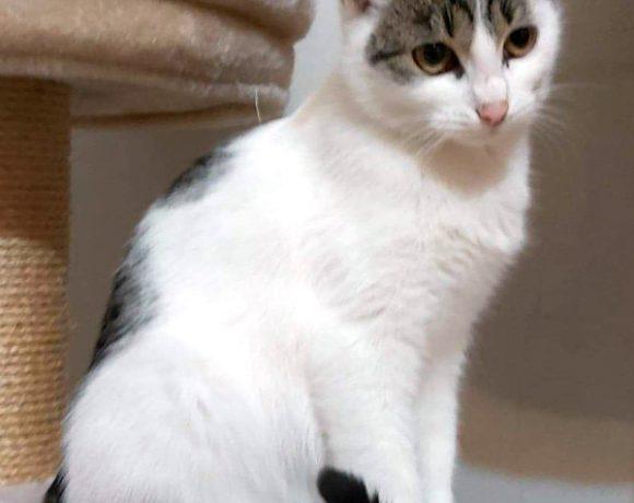 Irma śliczna kocia panienka