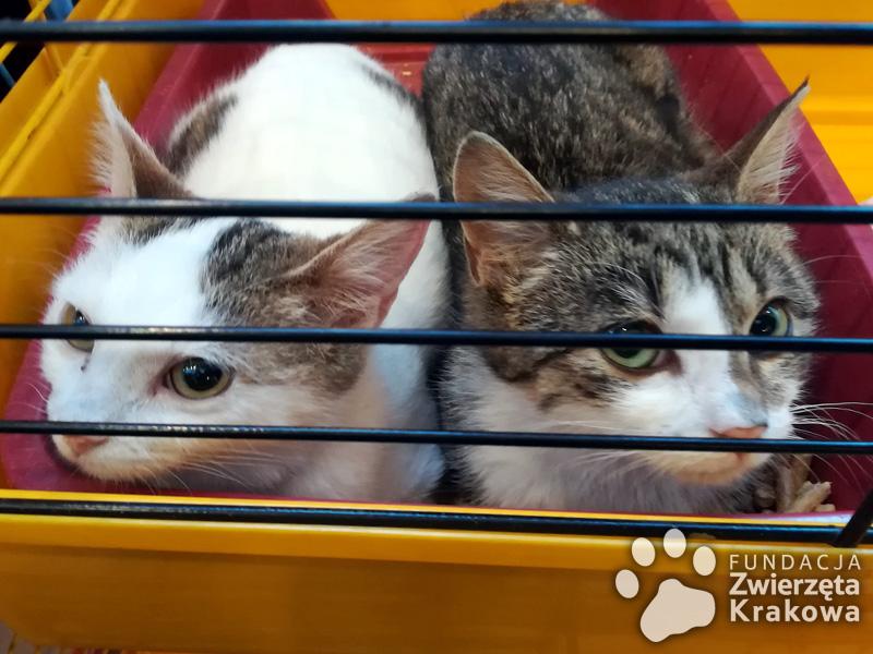 Mila i Lila marzą o własnym domu