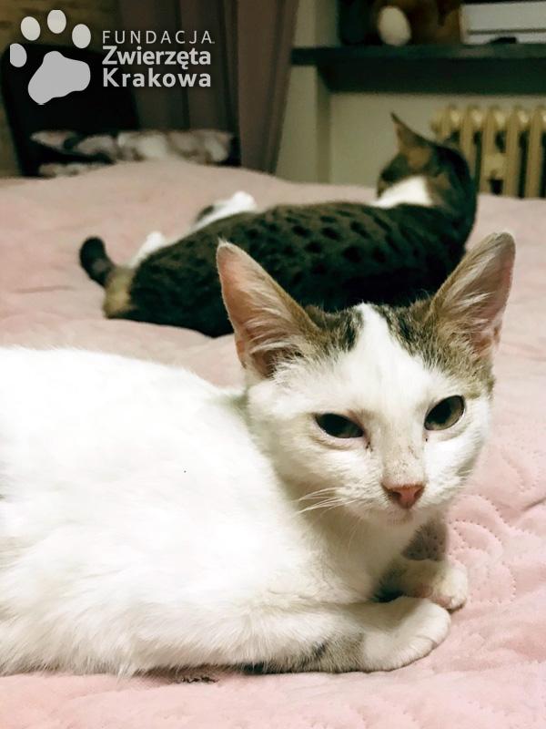 Piękne kocie rodzeństwo