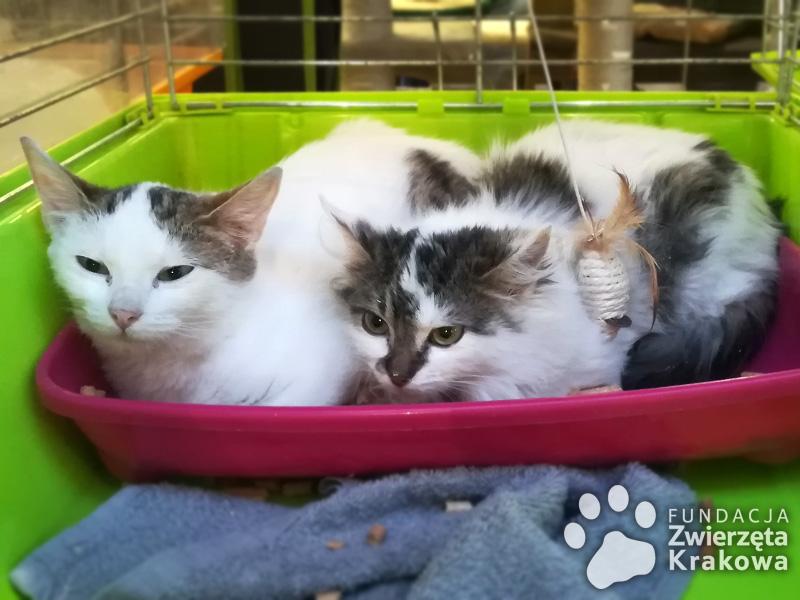 Piękne kocie siostrzyczki