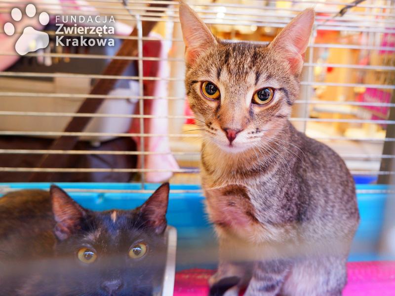 Koteczka Kreseczka i jej braciszek Tofik