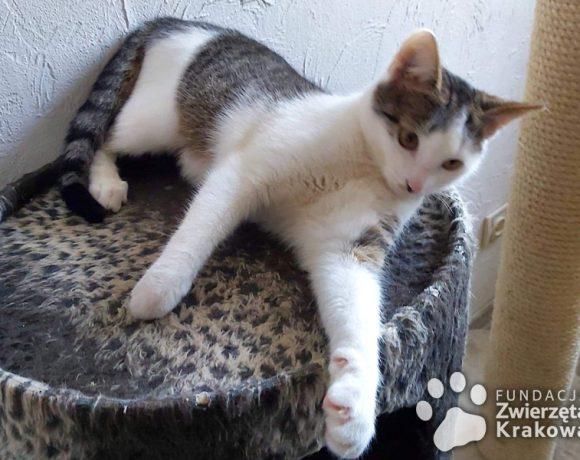 Kazia – najlepsza kotka na świecie