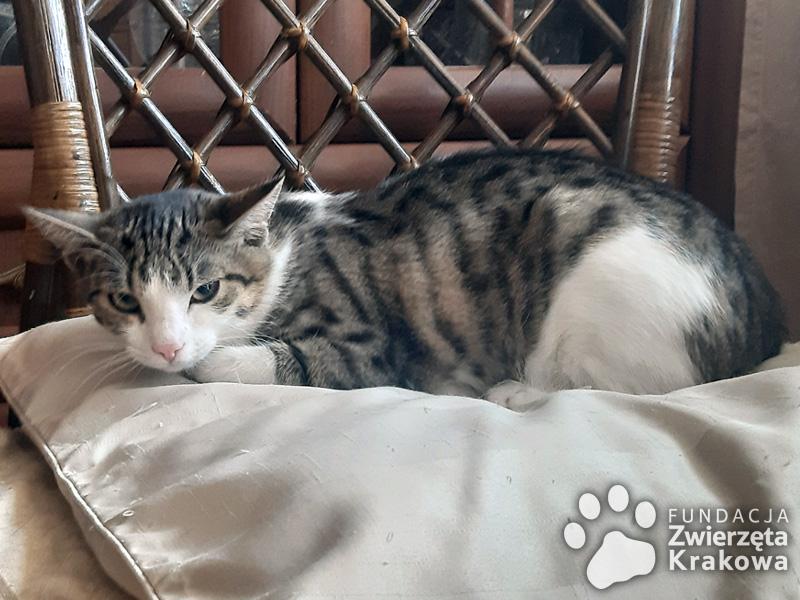 Hania i Balbinka koteczki przyjaciółki