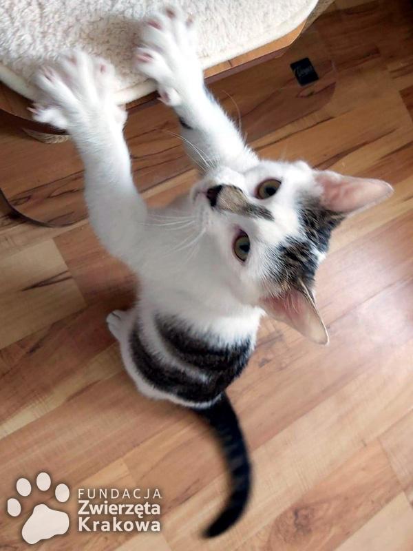 Bolek kotek do przytulania