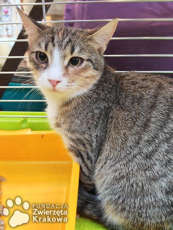 Inez – łagodna koteczka
