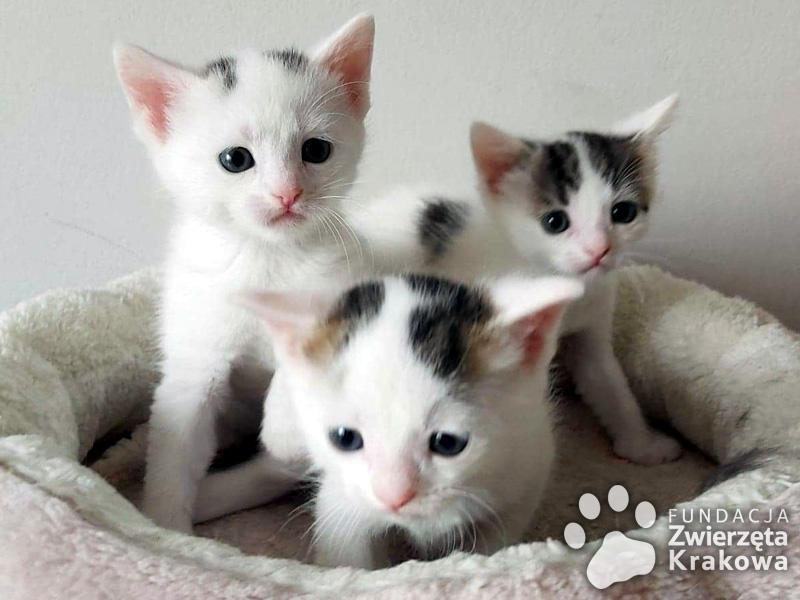 Śliczne małe kocięta