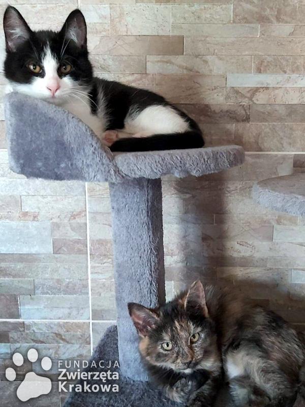Fela i Mela koteczki jak cukiereczki