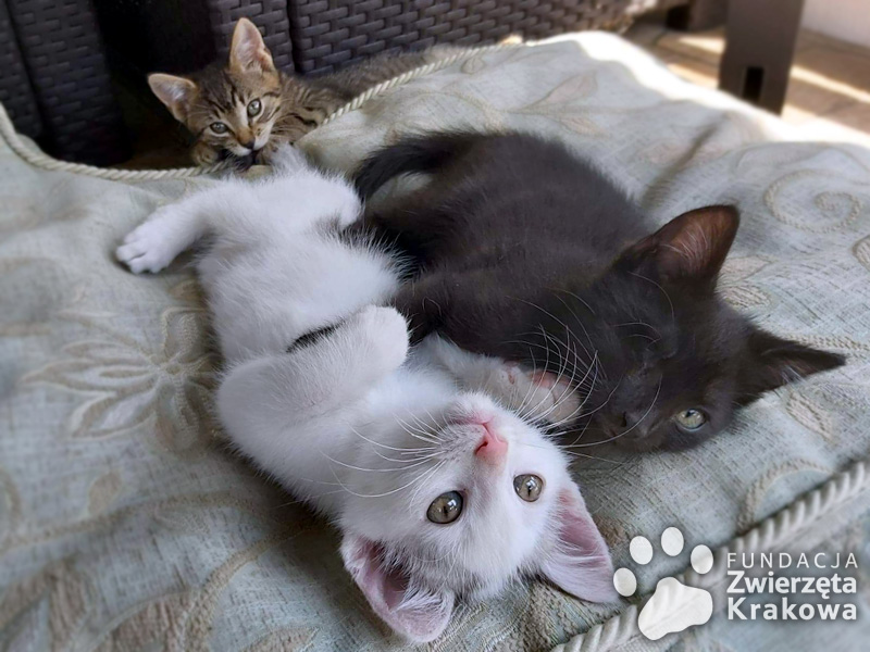 Kociaki rozrabiaki