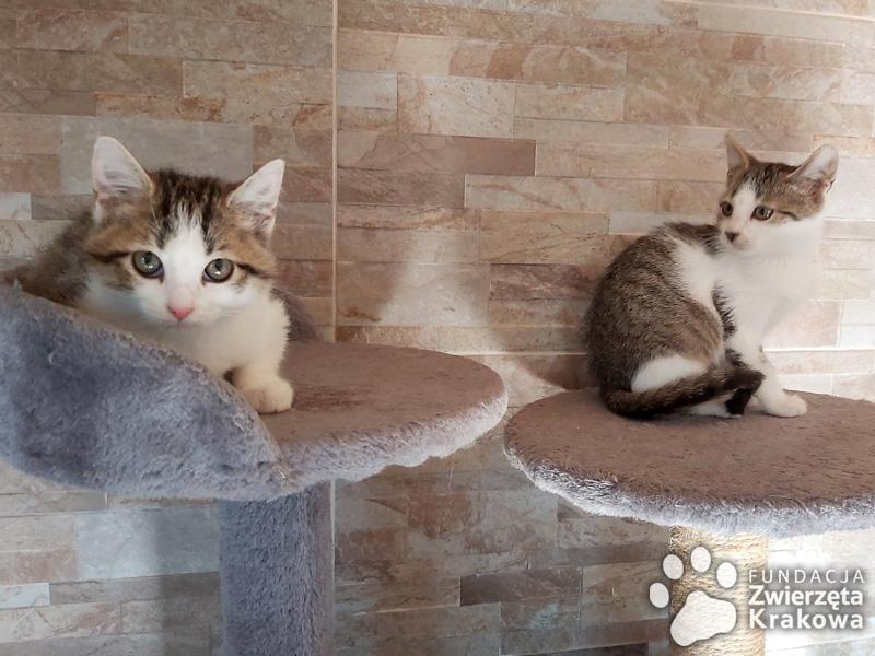 Kotki przytulanki