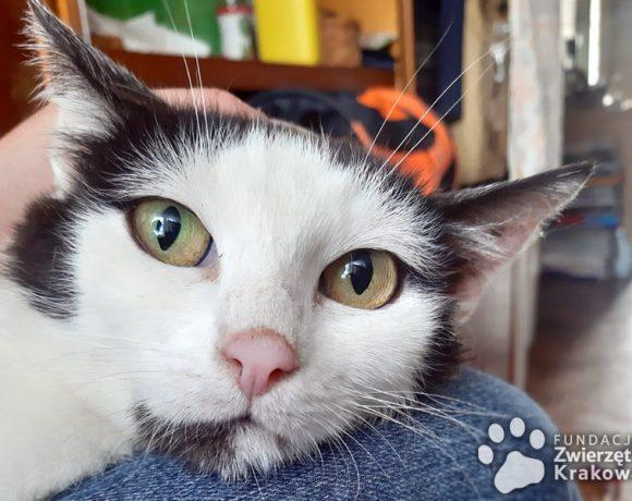 Łagodna koteczka Malwinka