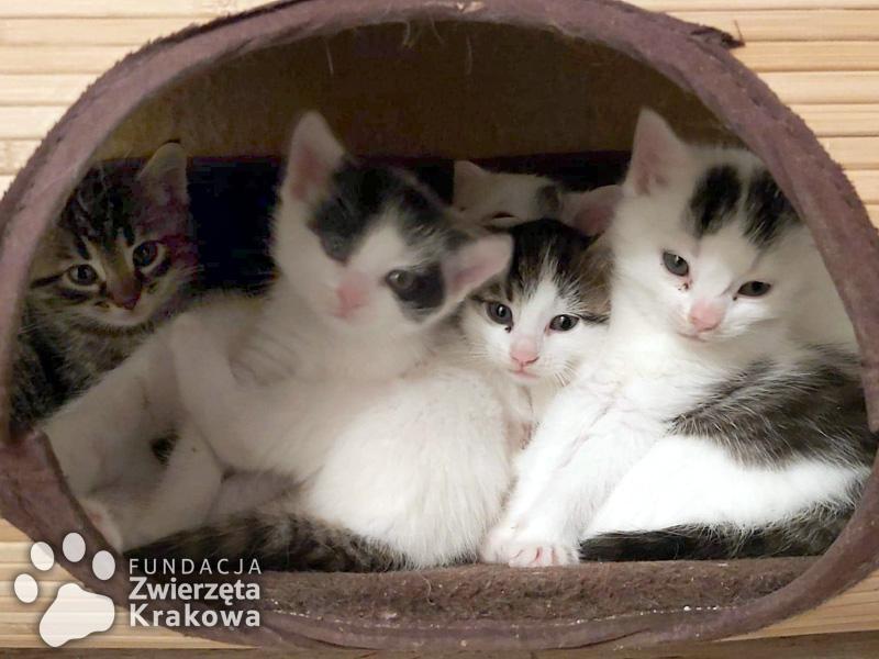 Koteczka Bella i jej piękne dzieci