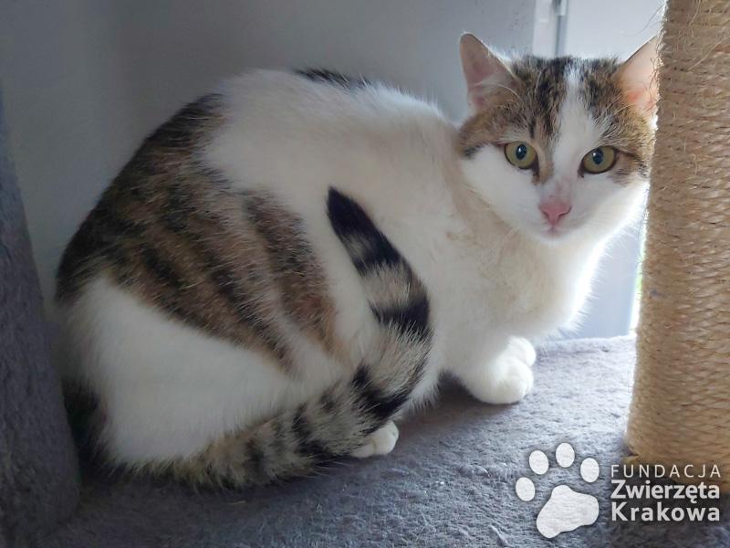 Śliczna koteczka Klara