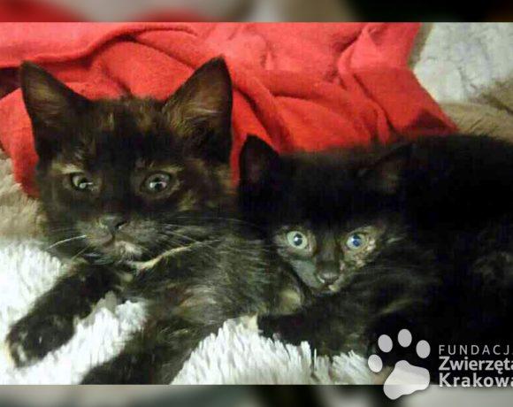 Małe czarne sierotki