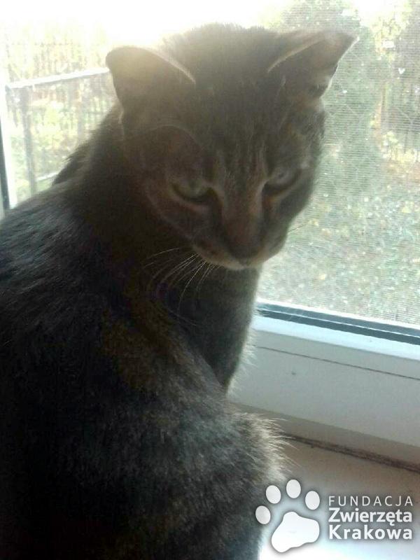 Bardzo milusia koteczka Milusia