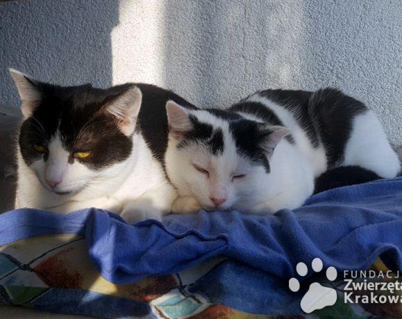 Peppe i Pedro szukają domu