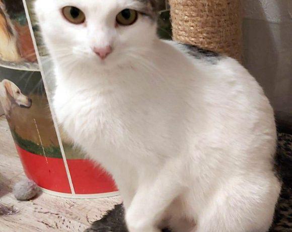Piękna koteczka Bella