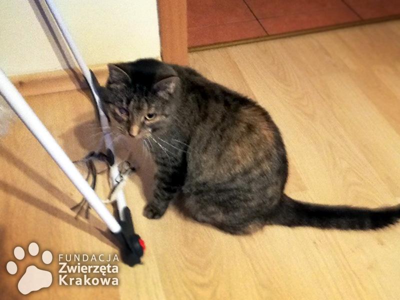 Nika wyjątkowo miziasta koteczka