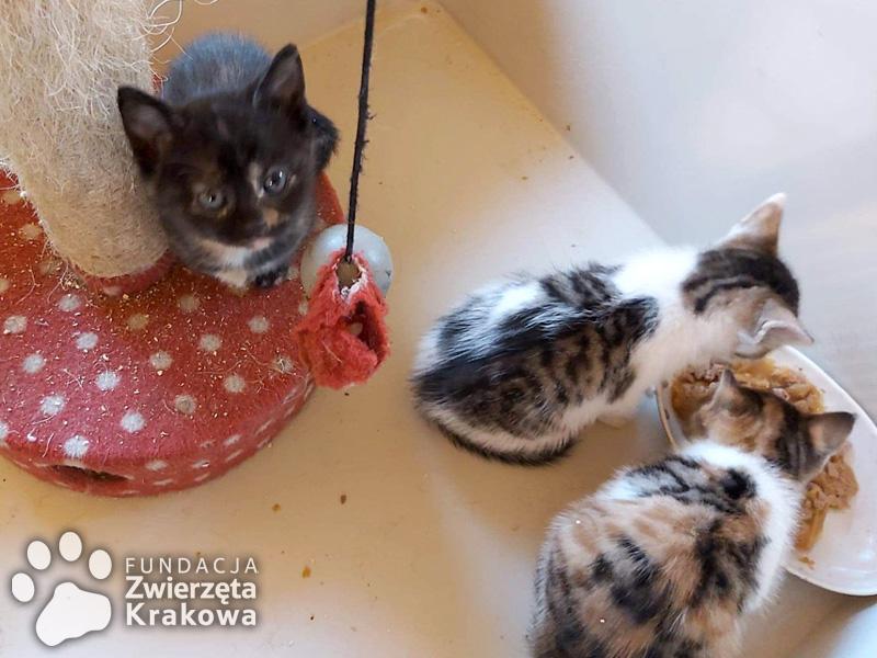 Urocza mama i śliczne kocięta