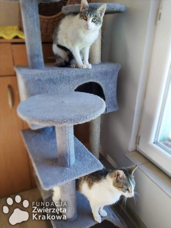 Paweł i Gaweł szukają dobrego domku