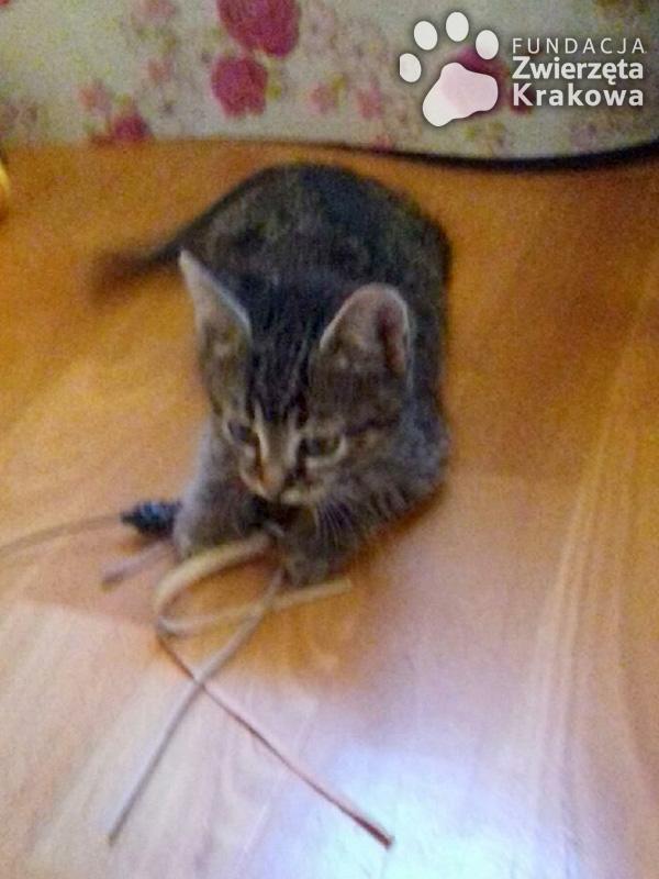Fiona koteczka słodsza od cukiereczka