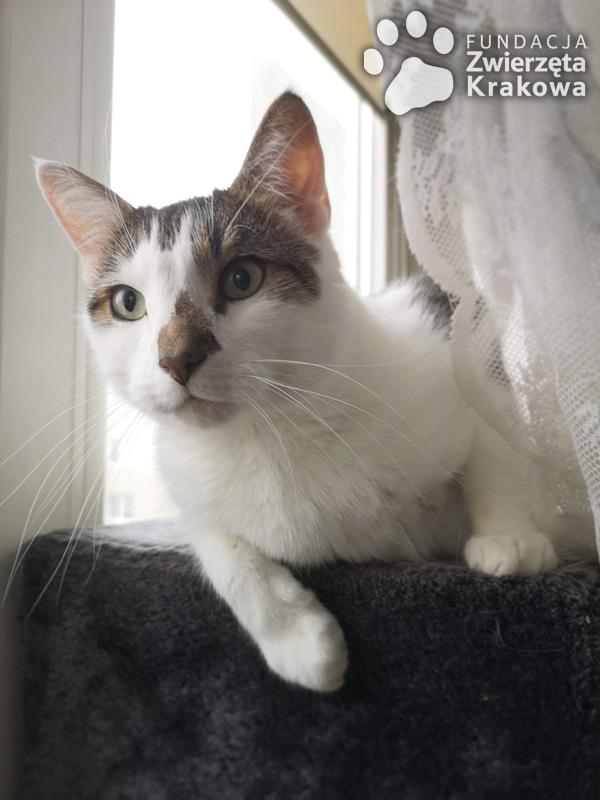Kitek uwielbia być głaskany za uchem i pod bródką