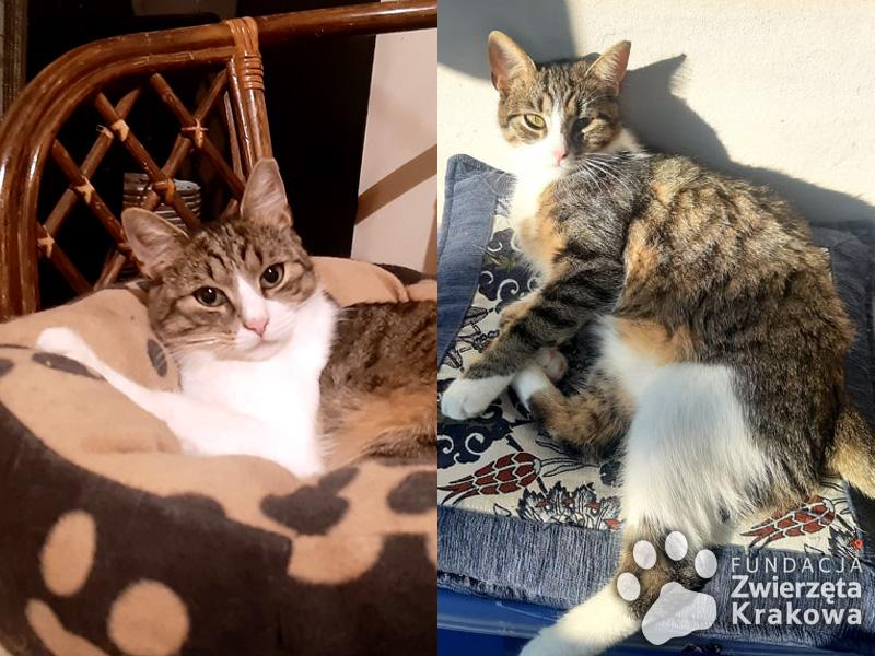 Maciek i Pędzel –  dwa młode kocurki szukają wspólnego domu!