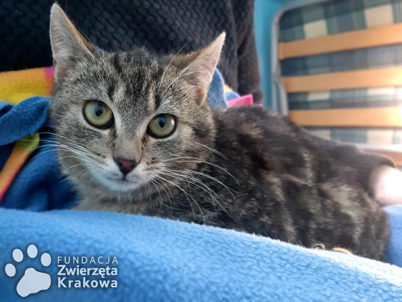 Mania  z kocią białaczką szuka wspaniałego domu!