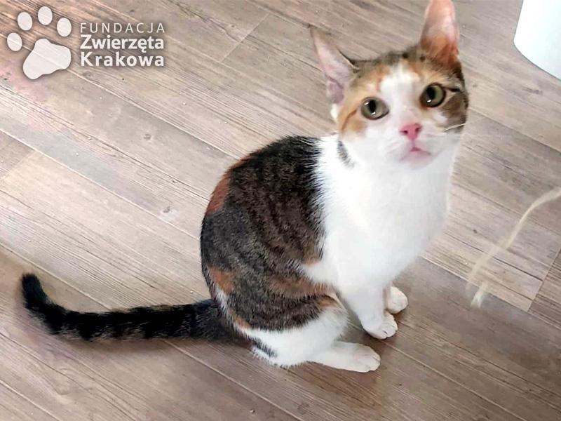Mija i Sisi piękne koteczki o cudownym charakterze