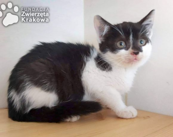 Dusia słodka kotusia